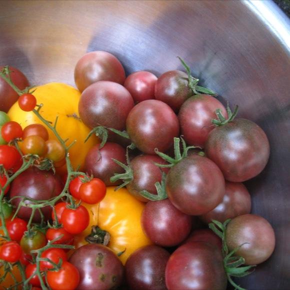 Tomato Heirloom Black Cherry Friends School Plant Sale