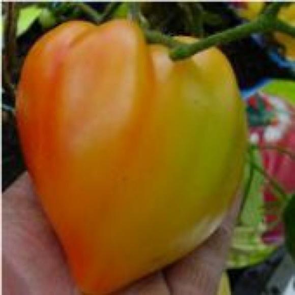 Tomato, Heirloom - Ora...