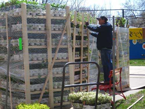 Man standing on a step ladder unwrapping pallets full of plants