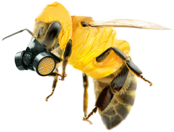 A bee wearing a gas mask