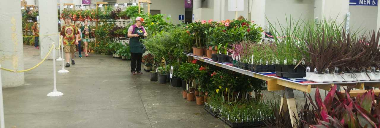 Plants on tables, a few people checking them over