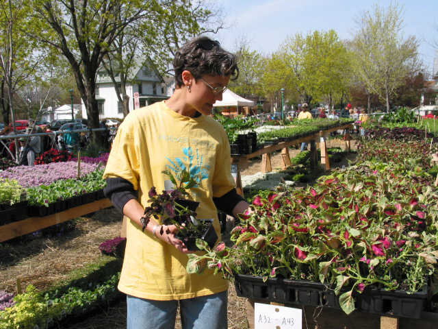 Woman in yellow T-shirt with blue logo, looking at coleus plants