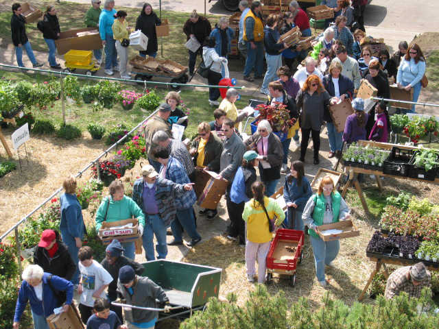 People with boxes streaming into the plant sale
