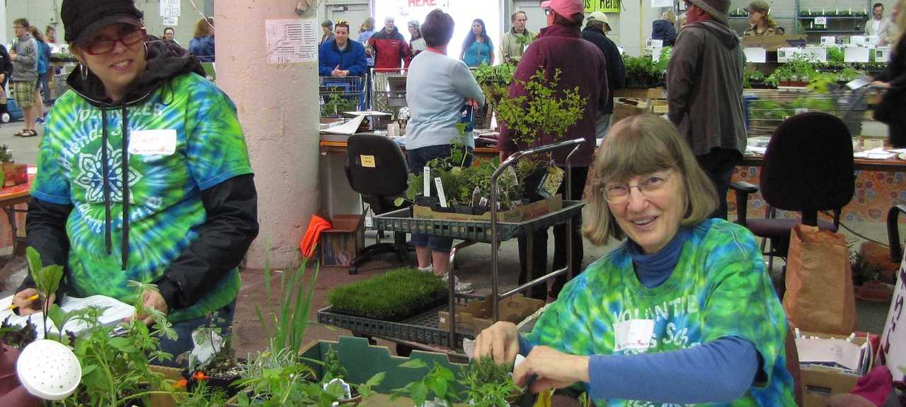Volunteers working to identify plants before reshelving. (Sale photos are from pre-COVID days.)