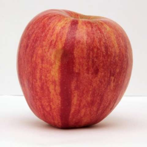 KinderKrisp apple, red with yellow striations