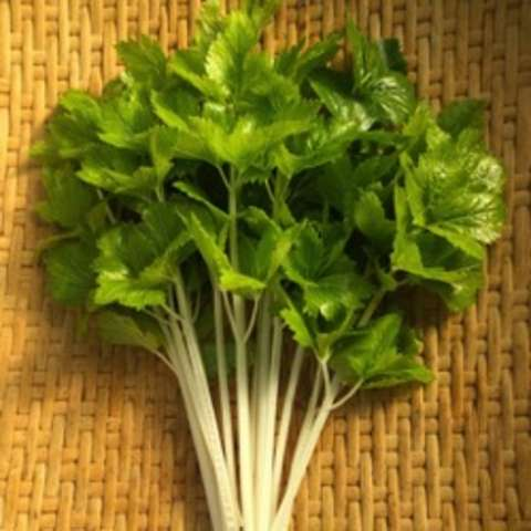 White Queen celery, white stalks and green leaves
