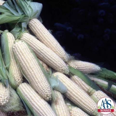 How Sweet It Is corn, very light almost white kernels