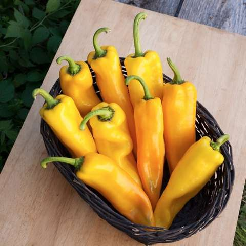 Lively Italian yellow peppers, long and pointed