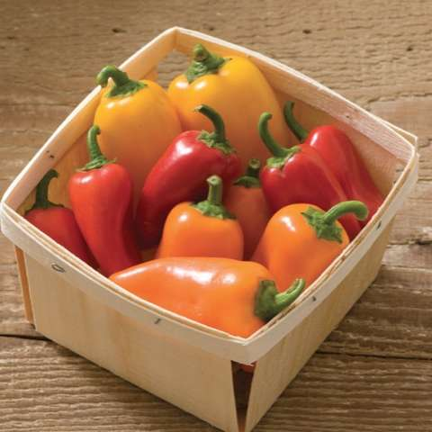 Capsicum Lunchbox Mix, small red, orange, and yellow peppers