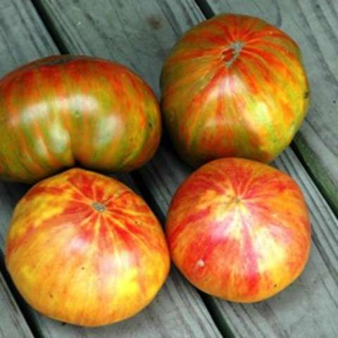 Copia tomato, red and yellow mottled tomatoes