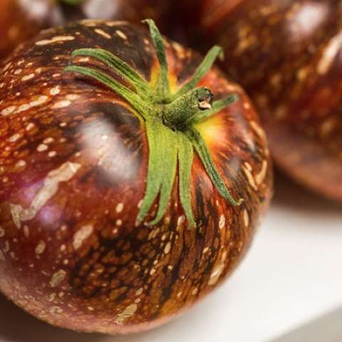 Dark Galaxy tomato, dark red-purple with tan vertical marks