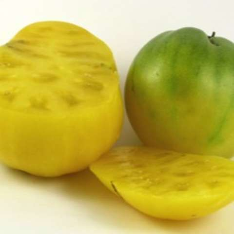Lemon Ice tomato, yellow fruits
