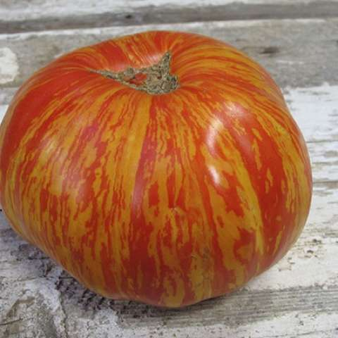 Solar Flare tomato, red and yellow stripe