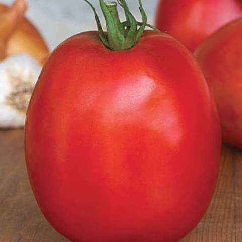SuperSauce tomato, very red large roma shape