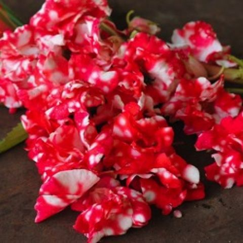 Balsam Peppermint Sticks, red flowers with some white