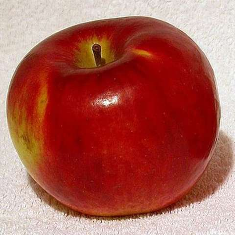 Cortland apple, mostly red, shiny