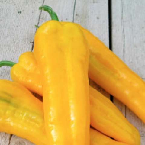 Capsicum Ramiro Yellow, gold long peppers, sweet