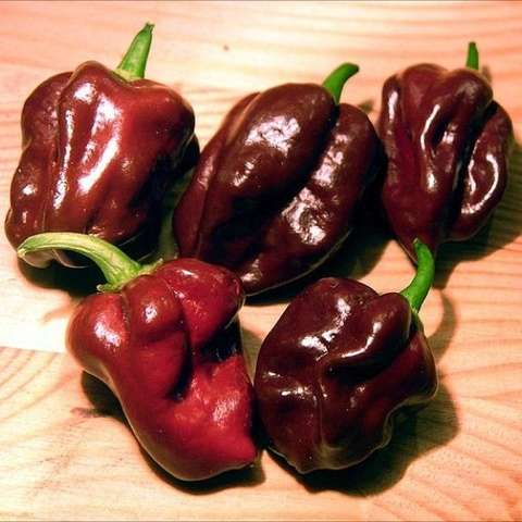Habanero pepper, chocolate