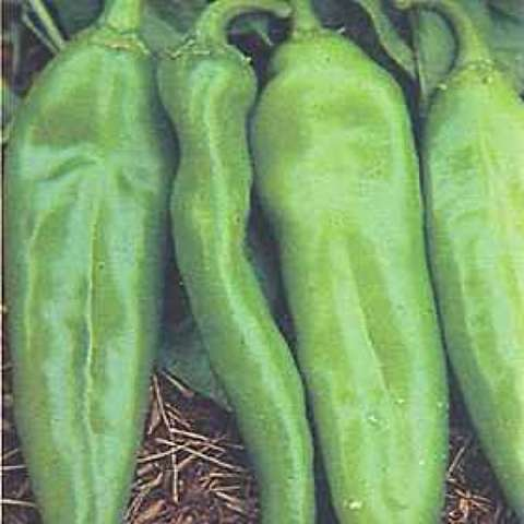 Anaheim peppers, long green shapes