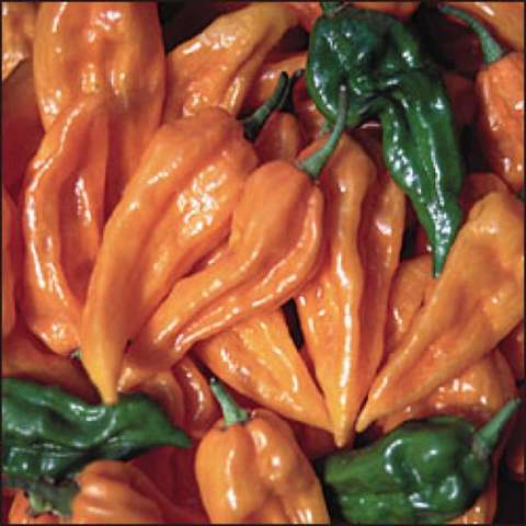 Fatalii peppers, orange flattened peppers