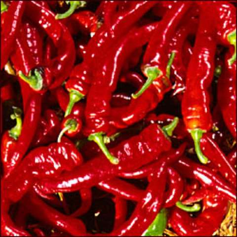 Jimmy Nardello peppers, dark red, long and thin