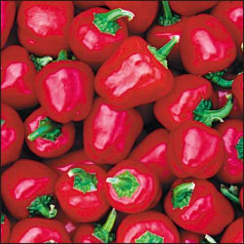 Red miniature bell peppers