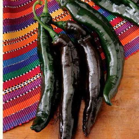 Pasilla Holy Mole pepper, very dark green almost black, long thing peppers