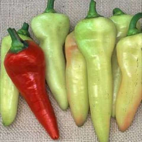 Sweet banana pepper, long thin yellow-green turning to red