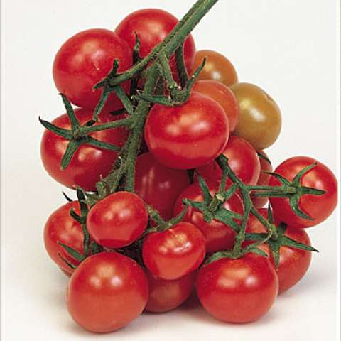 Christmas Grape tomato, cluster of red round small fruits
